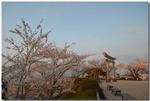 日和山 桜